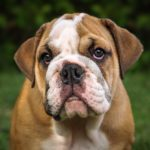 imagen del perro bulldog
