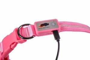 cargador del collar de seguridad led blazin